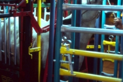 Implementos ganaderos049